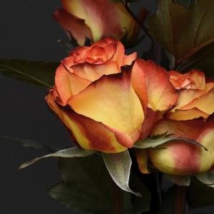 Ikebanos – gėlių komponavimo japonišku stiliumi – kūrybinės dirbtuvės viešame renginyje 1 asmeniui