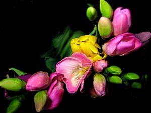 Ikebanos – gėlių komponavimo japonišku stiliumi – kūrybinės dirbtuvės iki 10 žmonių
