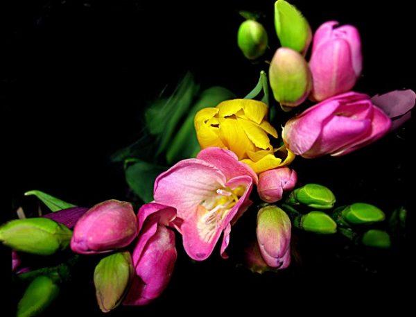 Gėlių komponavimas japonišku stiliumi , Sakuros Kelias paslaugos