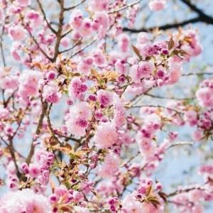 Paskaitos japonų kultūros temomis. Temos ir kainos sutartinės.